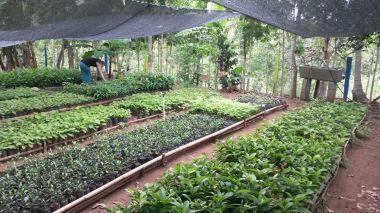 ProduccionplantasCal (2)