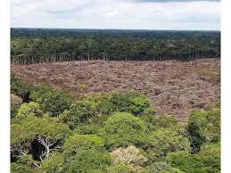 DeforestacionPty1