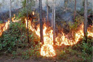 DeforestacionPty2