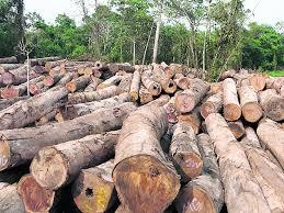 DeforestacionPty3